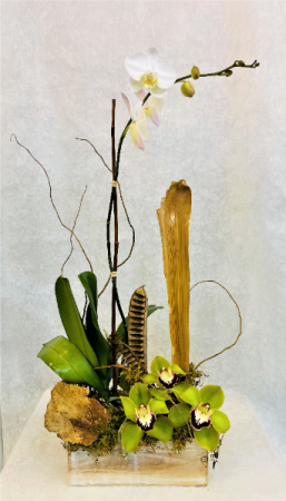 Single Orchid  Plant with Cymbidium orcids