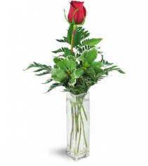 Single Red Rose in a Bud Vase