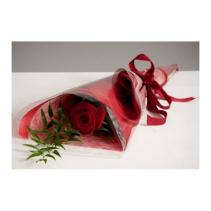 Single red rose single flower