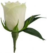 Simplicity Single Rose Boutonniere