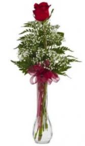 Single Rose Budvase rose