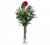 Single Rose Roses