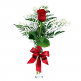Classic Single Red Rose Valentines day