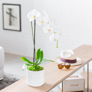 SINGLE WHITE  in Coral Gables, FL | FLOWERS AT THE GABLES