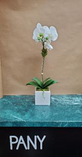 Single White Orchid Arrangement