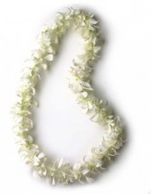 single white orchid lei lei