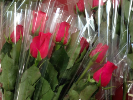 Single Wrapped Long Stem Red Roses ((Pick Up Only) Single Wrapped  Roses
