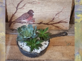 Skillet Succulent Garden plants