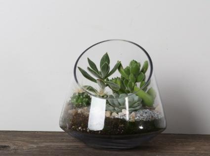 Slanted cut glass  Succulent Planter