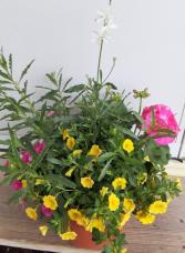 small combo pot plants will vary