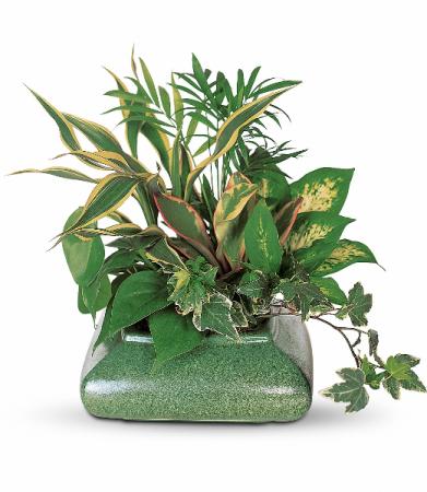 Small Dish Garden Green Plant
