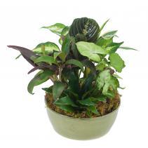 Small Dish Garden Plant