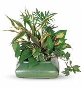 Small Dishgarden Plants