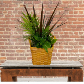 Small Planter in Basket