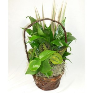 Small Green Planter plants