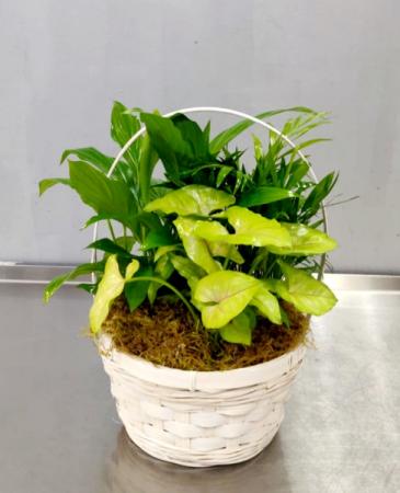 Small Mixed Green Plants Plants