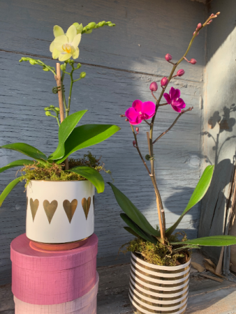 Small Orchid in Seasonal Planter Plants