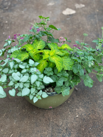 Small outdoor planter