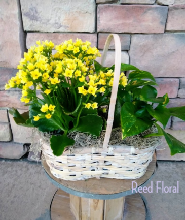 Small Plant & Blooming Basket