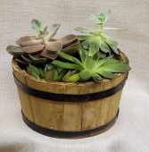 Small Succulent Dish Garden Plant