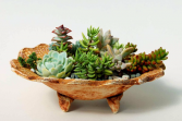 Small Succulent Garden Plant & Locally Made Pottery