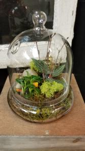 Small Terrarium  Terrarium