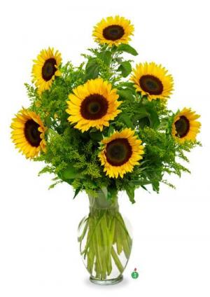 Snazzy Sunflowers - Special of the Week!  in Liberty, NC | GARRETT'S FLOWER SHOP