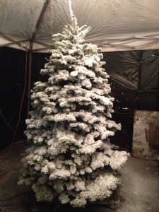 Fresh Cut Snow Flocking Le Fir Xmas Tree Please Call For Prices And Size