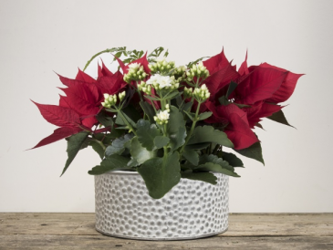 Snowdrop Planter  Christmas