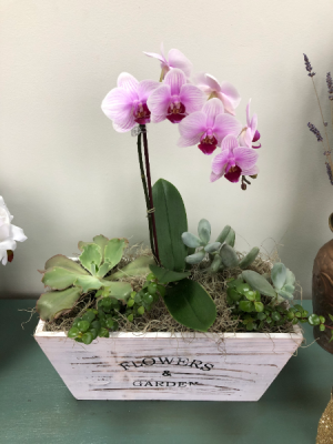 So Country With A Lil Class! Succulent Garden in Lexington, NC | RAE'S NORTH POINT FLORIST INC.