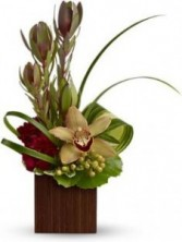 Sophisticated Cymbidium