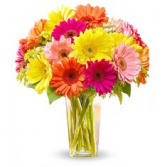 Sorbet Floral Arrangement