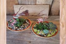 Southwest Succulent Bowls plants