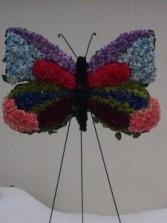 SP29 Butterfly