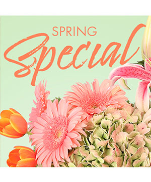 Special of Spring Florals Designer's Choice in Canton, IL | CJ FLOWERS & MORE