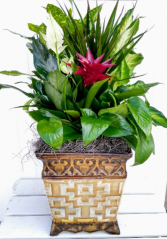Specialty Mixed  Planter in Tin