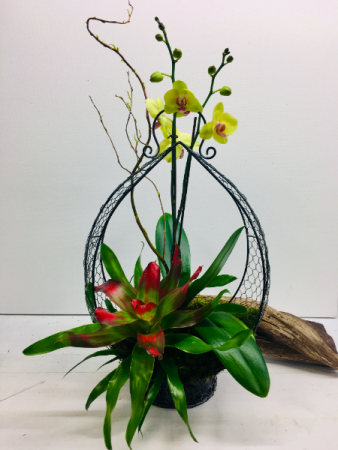 Spectacular Orchid & Bromelaid Arrangement Plants