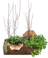 Spectacular Succulents Succulent Planter