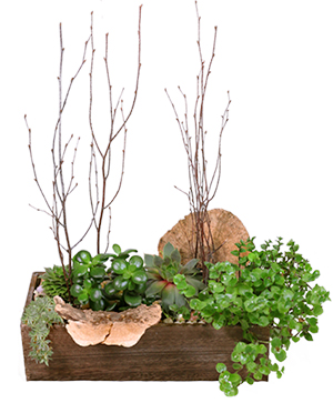 Spectacular Succulents Succulent Planter in Washburn, ND | Frontier Floral & Gifts