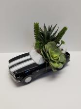 Speedy Succulent