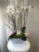 Speggtacular Orchid  Plant Arrangement
