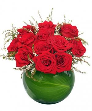 Spellbound Roses Red Rose Arrangement in Hudson Falls, NY | THE ARRANGEMENT SHOPPE
