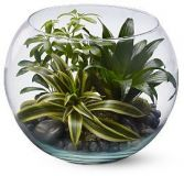 SPHERE GARDEN PLANTED GLASS BOWL