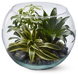 Sphere of Tranquility Plants For Him in Los Angeles, CA | MY BELLA FLOWER