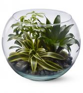 Sphere of Tranquility Terrarium