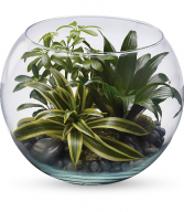 Sphere of Tranquility Terrarium HPL021A