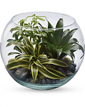 Sphere Of Tranquility Terrarium Plants
