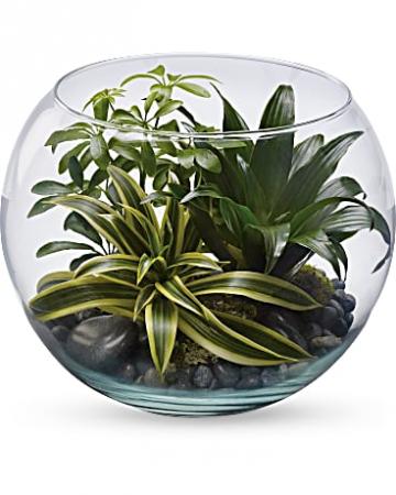Sphere Of Tranquility Terrarium Plants