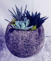 Sphere Succulent Garden