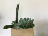 Spirit of Zen Too Succulent Plants